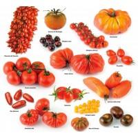 Семена коллекционных сортов томата