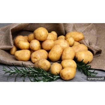 купить семенной картофель КЕМЕРОВЧАНИН в Новосибирске с доставкой по РФ