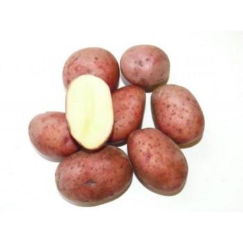 купить ЛЮБАВА в новосибирске, купить Картофель семянной в новосибирске