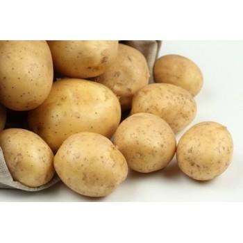 АДРЕТТА семенной картофель в Новосибирске