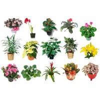 Растения для дома в Новосибирске