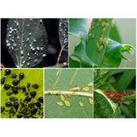 Эффективные средства защиты от насекомых вредителей